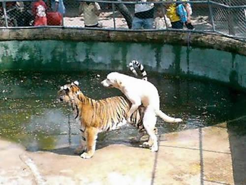 Cão de coragem